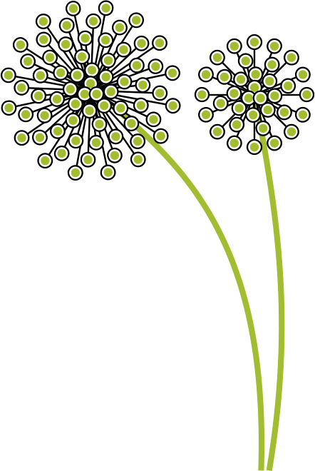 Mo Choy design seed head graphic Illustration